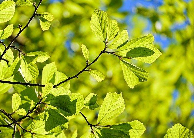 Grüne Blätter, die von der Sonne angestrahlt werden: die KD-Bank möchte Gutes bewirken und finanziert vor allem ethische, soziale und ökologische Projekte