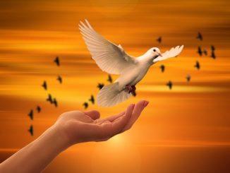 Offene Handfläche und weiße Taube, im Hintergrund Sonnenuntergang und Vögel: Die Steyler Bank GmbH setzt sich für Frieden, Gerechtigkeit und Bewahrung der Umwelt ein