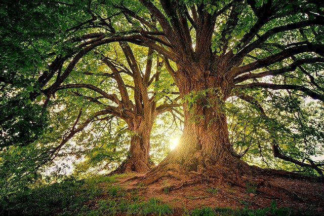 Zwei gesunde grüne Bäume, im Hintergrund die Sonne: Die UmweltBank möchte Ökonomie und Ökologie sinnvoll miteinander verbinden