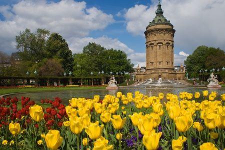 Gelbe und rote Blumen, im Hintergrund: Wasserturm von Mannheim: Wenn du einen Schnellkredit benötigst, ist es eventuell eine gute Idee, einem Leihhaus Mannheim einen Besuch abzustatten!